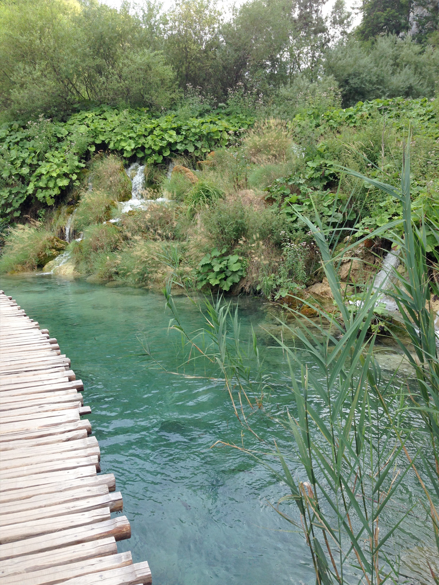 Plitvice Lakes National Park - Flora