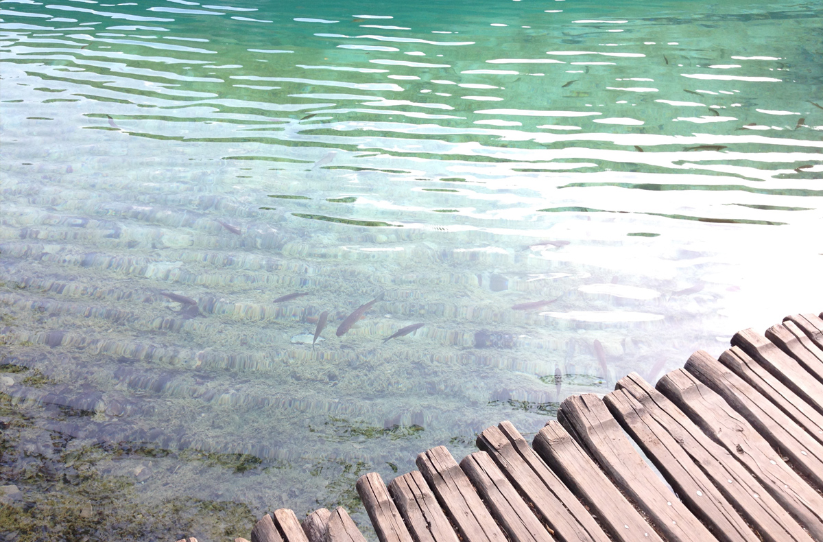 Plitvice Lakes National Park - Fish